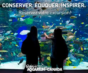 Ripleys Aquarium Marché Francais